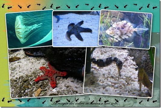 gardaland sea life 2