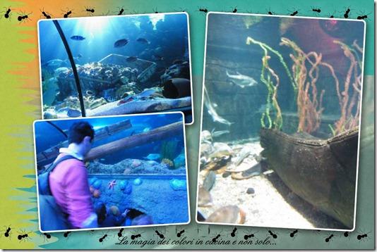 gardaland sea life 4