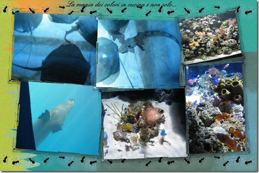 gardaland sea life 5